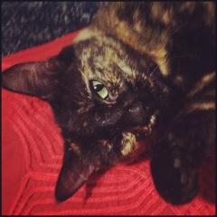 Wako, Bard Brawling cat